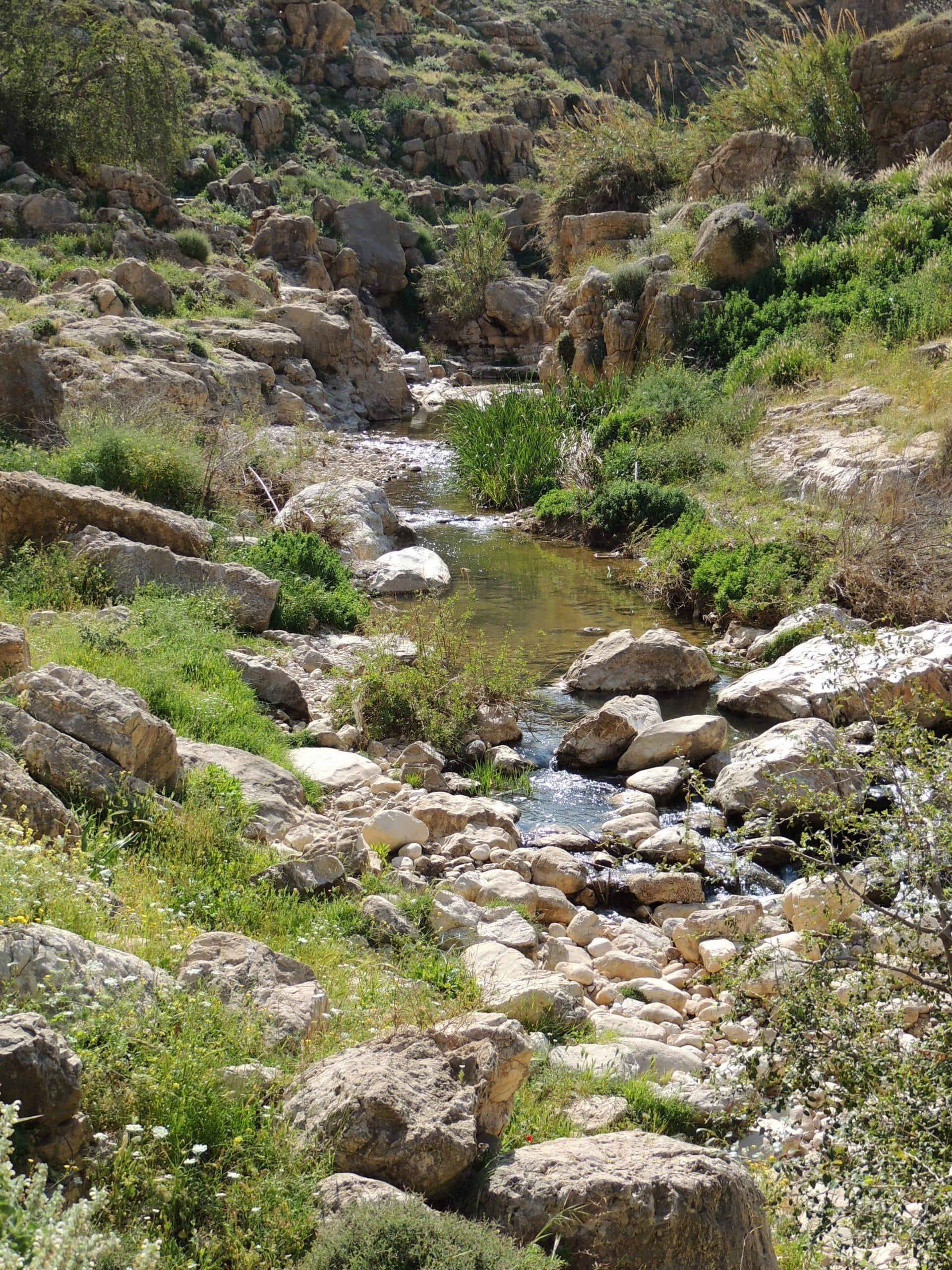 wadi 2 (1)
